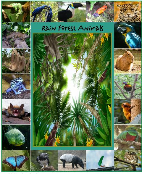 Cover 1 Older B Wpdf 1252 Downloads Animals Of The Rainforest Pagepdf 1047