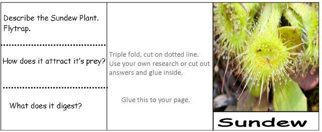 Sundew Plant Diagram Sundew Plant Colouring
