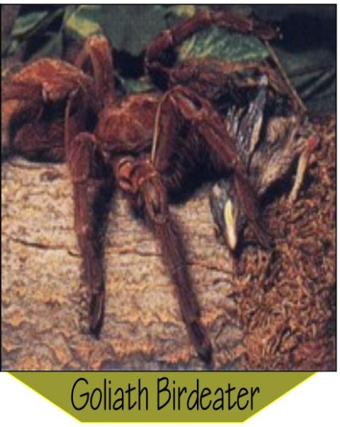 Www ehow com info 8126917 dangerous animals brazilian rainforest html