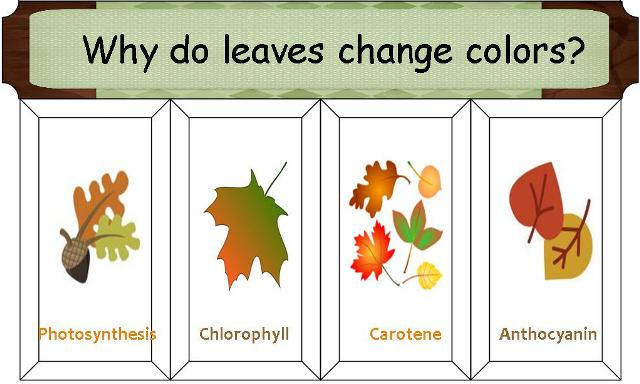 Why do leaves change color printable