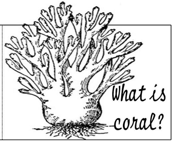 coloring pages coral reefs - photo #27